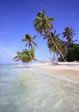Palm trees on exotic beach Stock Images