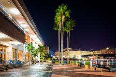 Palm trees and the exterior of the Convention Center at night in. Tampa, Florida Stock Photo