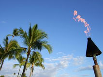 Palm trees and fire Stock Images