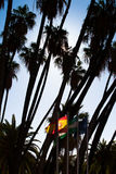 Palm trees and flags. Royalty Free Stock Images