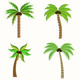 Palm trees. Flat style Vector illustration Royalty Free Stock Photography