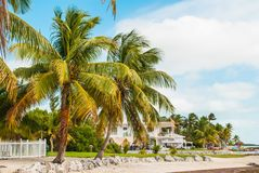 Palm Trees in the Florida Keys. Palm Trees on the Beach in the Florida Keys Stock Photos