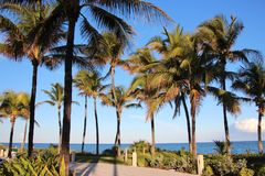 Palm Trees in Florida Royalty Free Stock Image