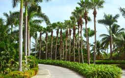 Palm trees. Florida USA Royalty Free Stock Images