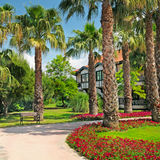 Palm trees and flower beds Royalty Free Stock Images