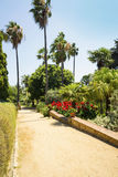 Palm trees, flowers and agaves landscape. Stock Photos