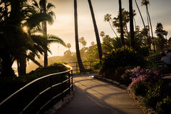 Palm trees and flowers along a walkway at sunset stock images