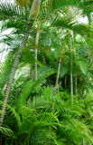 Palm trees foliage Royalty Free Stock Image