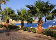 Palm trees and footway in tropical garden, Red sea, Sharm el She Royalty Free Stock Image