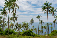 Palm trees forest on the beach near ocean Royalty Free Stock Photography
