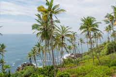 Palm trees forest on the beautiful beach near ocean Royalty Free Stock Images