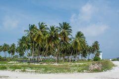 Palm trees forest near the village road at the tropical island Maamigili. In Maldives royalty free stock image