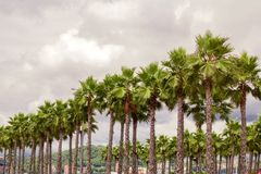 Palm trees forest stock photography