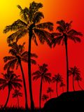 Palm trees forest portrait background Royalty Free Stock Photos
