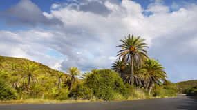 Palm Trees Forest Vai Crete Royalty Free Stock Photos