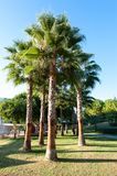 Palm trees in formal garden of summer park. Turkey Royalty Free Stock Photo
