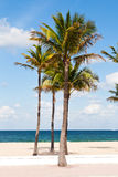 Palm trees in the Fort Lauderdale, Miami Royalty Free Stock Photography