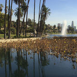 Palm trees and fountain reflection at Echo Park lake. Stock Photos