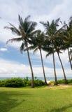 Palm trees frame the ocean near Poipu stock photos