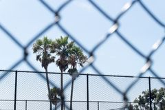 Palm trees framed by chain link fence in prison. Palm trees framed by chain link fence in prison, gulag, labour camp, school or unwanted institution. Dreaming Stock Image