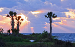 Palm trees framed by a sunset. Towering palm trees on an island framed by a sunset and the bay with the sun's rays piercing the clouds in Crystal River, Florida Stock Image