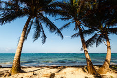 Palm trees framing a beach and ocean view Stock Image