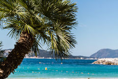 Palm trees in french riviera Stock Photo