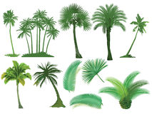 Palm trees. And fronds on white background Royalty Free Stock Image