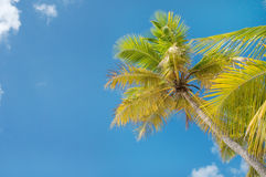 Palm Trees In Front Of Azure Skyline. Royalty Free Stock Photography