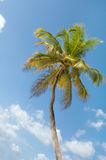 Palm Trees In Front Of Azure Skyline. Stock Image