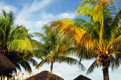 Palm Trees In Front Of Azure Royalty Free Stock Images
