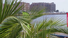 Palm trees in front of city and sea landscape. Palm trees in front of tropical city and sea landscape stock video footage