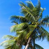 Palm trees in front of blue sky Royalty Free Stock Image
