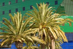 Palm trees in front of a green and blue building in Los Angeles Stock Images