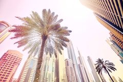 Palm trees in front of modern skyscrapers in Dubai. Stock Image