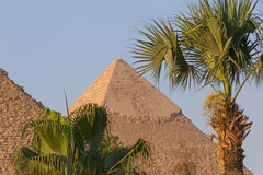 Palm trees in front of pyramids. In Giza Stock Photography