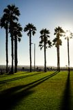 Palm trees in front of the sun California venice beach USA royalty free stock photography