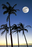 Palm Trees with Full Moon Royalty Free Stock Photos