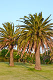 Palm trees in garden Royalty Free Stock Photography