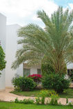 Palm trees in a garden Royalty Free Stock Photos