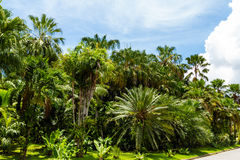 Palm trees garden Stock Photos