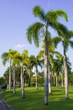 Palm-trees in garden Royalty Free Stock Photo