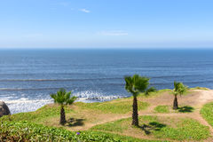 Palm trees and the garden by the ocean coast with blue sky Stock Images
