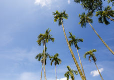 Palm trees in the garden Royalty Free Stock Images