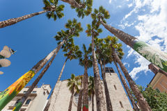 Palm trees in Girona, Spain Royalty Free Stock Photography