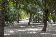 Palm trees giving shade on the beach Stock Photography