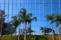 Palm trees with Glass building Royalty Free Stock Images