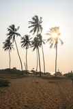 Palm Trees on Goan Beach. With sun setting behind tree Stock Photos
