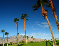Palm Trees on Golf Course Royalty Free Stock Images