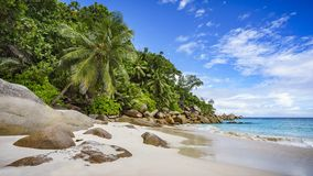 Paradise beach on the seychelles 4. Palm trees and granite rocks in the white sand on seychelles beach. Simply paradise Stock Images